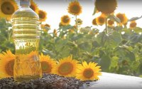 Sunflower-Oil-making-business