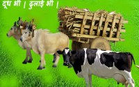 cow-dual-purpose-breeds-in-India