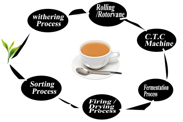 tea processing process in hindi