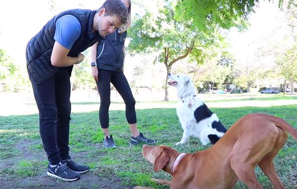 Animal-Trainer-kaise-bane