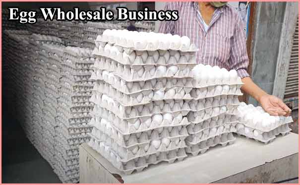 Egg Wholesale business in hindi