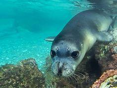 Monk seal 2