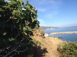 Fig tree and view to Karavostamo