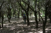 Ikaria trails 3