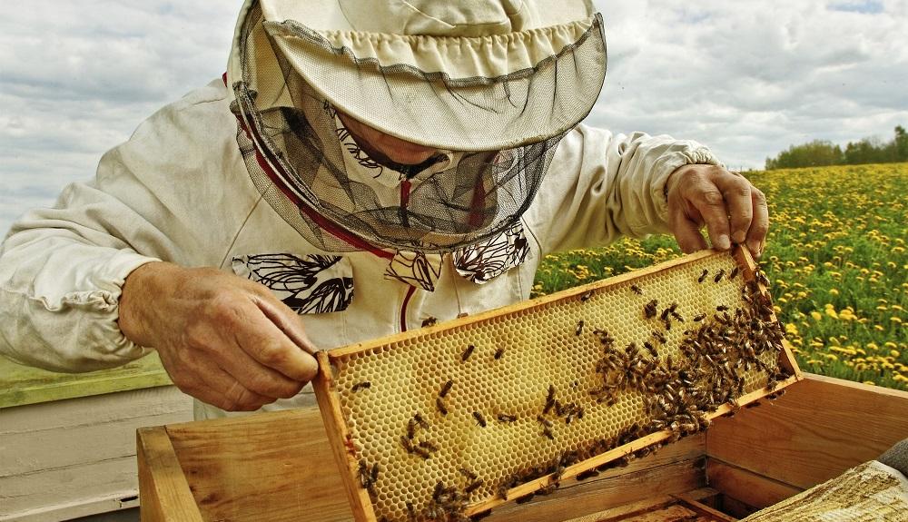 Εργαστήρι μελισσοκομίας