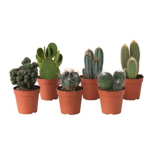 CACTACEAE Potplant IKEA