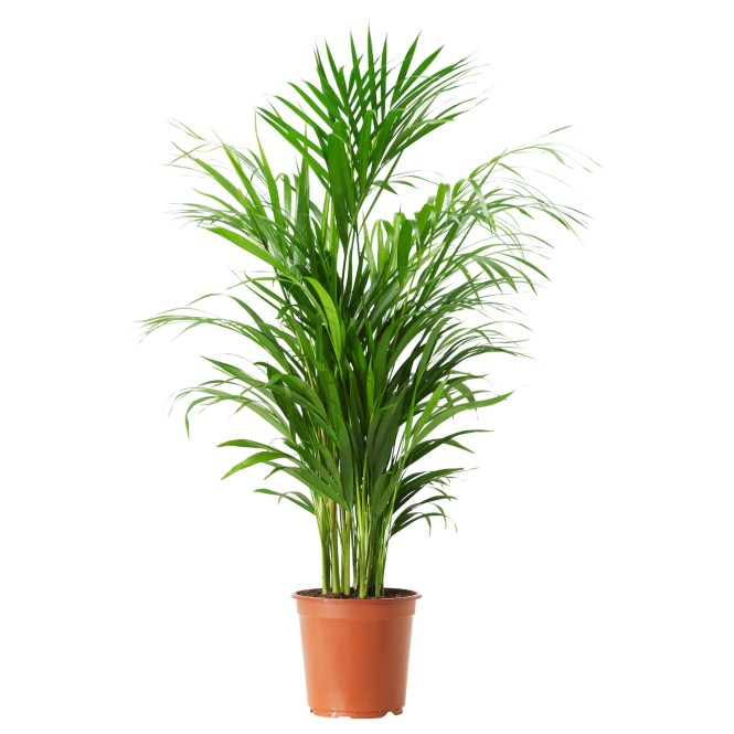 depiction of tall house plants for indoor the most remended