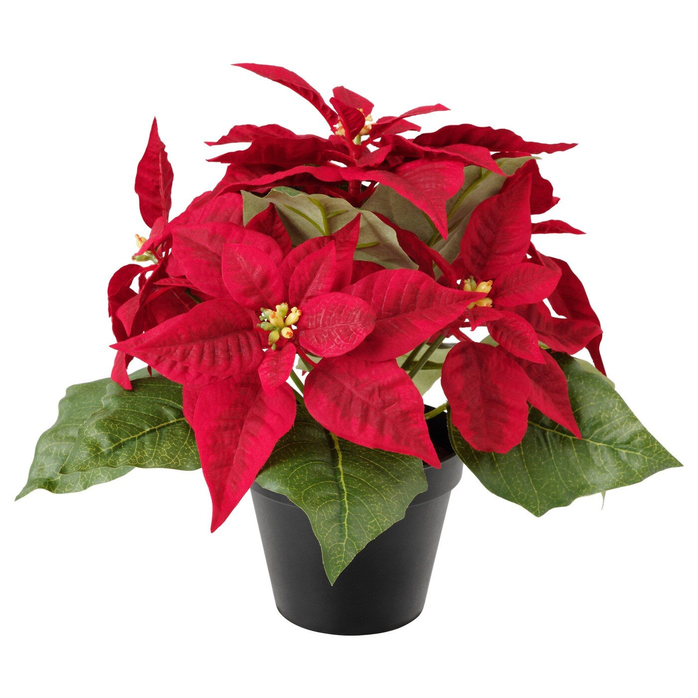 https://i1.wp.com/www.ikea.com/gb/en/images/products/fejka-artificial-potted-plant-poinsettia-red__0538278_pe651824_s5.jpg