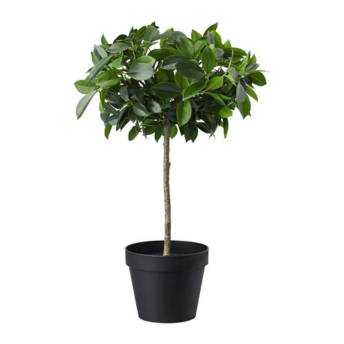 FEJKA Artificial Potted Plant Inoutdoorweeping Fig Stem