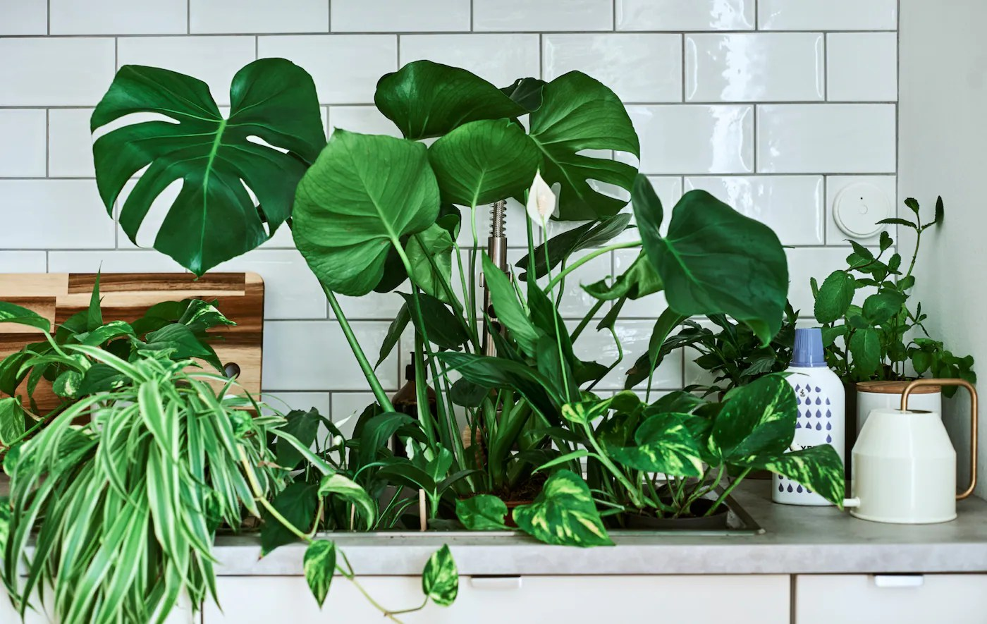 Planters Buy House Plants Online At Affordable Price In India Ikea