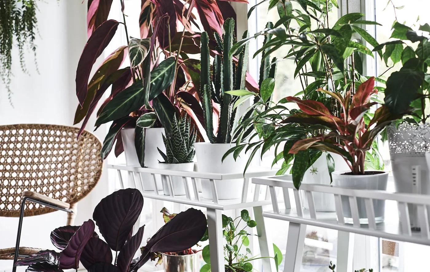 Se si opta per una disposizione in vasi pensili, è bene farsi consigliare da un vivaista per scegliere le piante più adatte a garantire un. Dove Sistemare Le Piante In Casa Ikea It