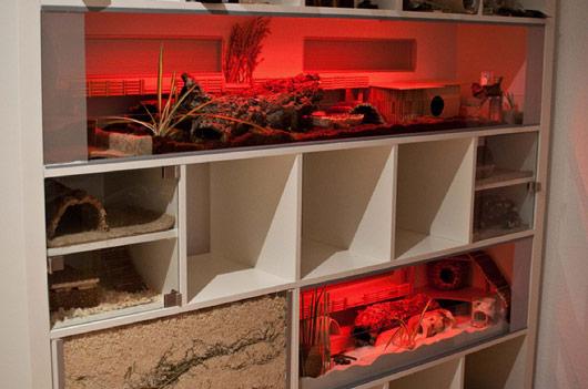 Ikea Expedit Three Story Hamster Habitat Ikea Hackers