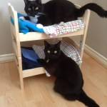 Turn Ikea Doll Beds Into An Adorable Cat Bunk Bed Ikea Hackers