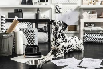 IKEA pet collection LURVIG