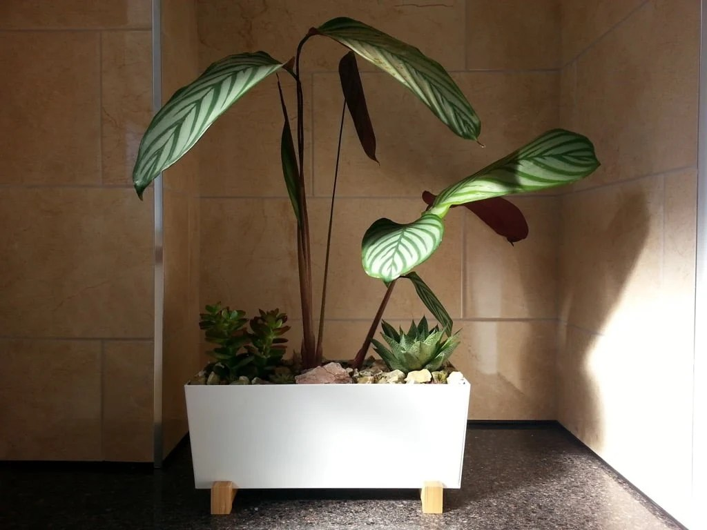 DIY self-watering planter - complete