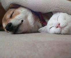 ペットの昼寝