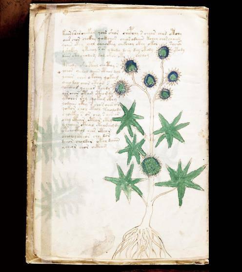 ヴォイニッチ手稿No.6vページ