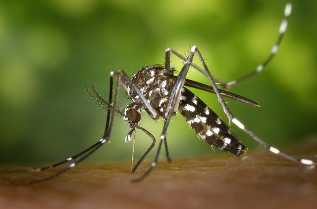 Paano Gumawa ng Mosquito Repellant Lotion