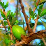Amazing Benefits of Argan oil at Php 99 per 15ml