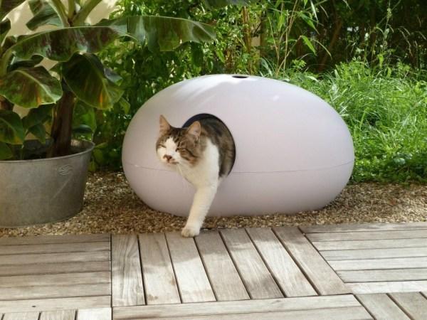 Kat stapt uit kattenbak Poopoopeedo