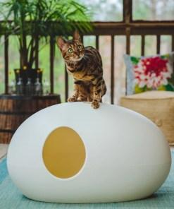 Kat op kattenbak Poopoopeedo