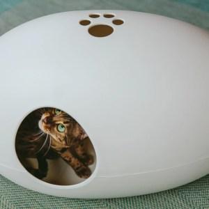 Kat in kattenbak Poopoopeedo