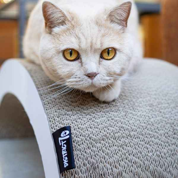 Kat op krabmeubel