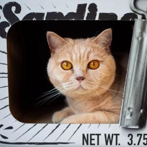Kat ligt in krabmeubel District 70 Sardine