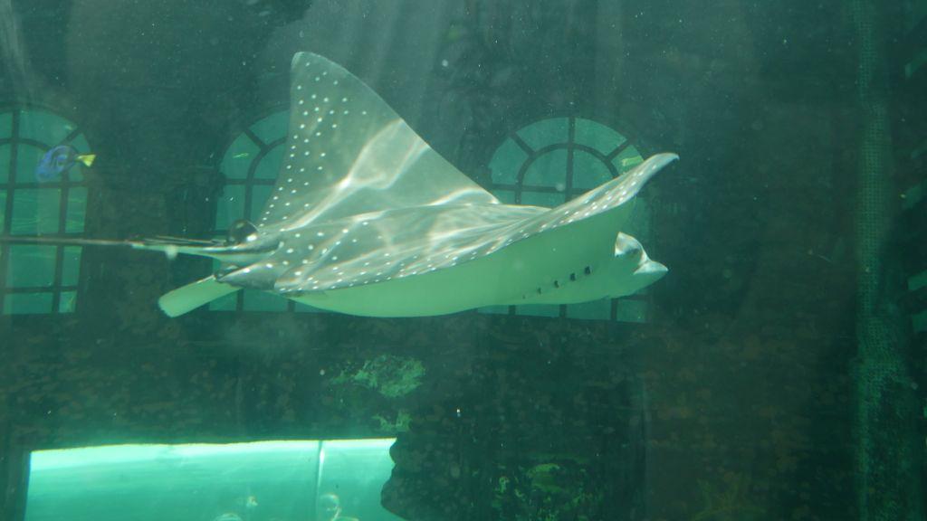 Rog in aquarium
