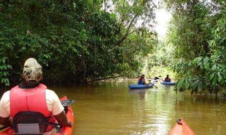 Aanbieding! Rondreis Suriname 9-daagse Combi Paramaribo & Bergendal