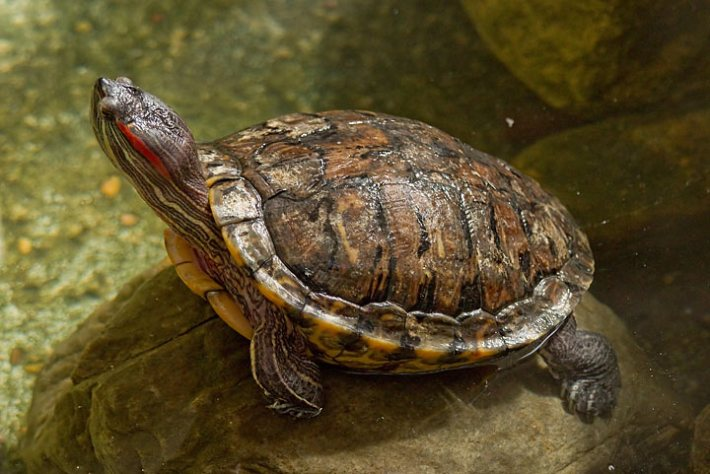 Health Issues – Monitoring Your Turtle