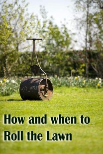 Rolling a Lawn - How and When to Do It