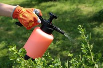 Top 10 Homemade Organic Pesticides