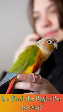 Is a Bird the Right Pet for Me?
