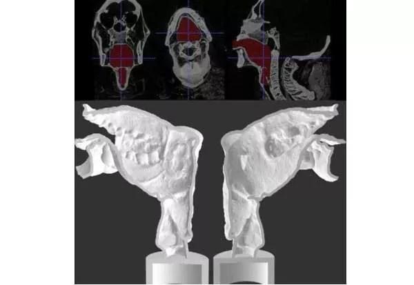 hghghfg 3000 ஆண்டுகளுக்கு முன்னர் வாழ்ந்தவர்களை பேச வைக்கும் விஞ்ஞானிகள்