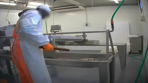 allevamento pesci