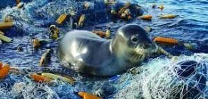 Inquinamento plastica e cannucce