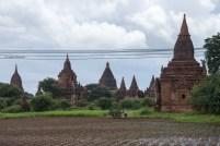 Un campo ai piedi di alcune delle 3000 stupa di Bagan.