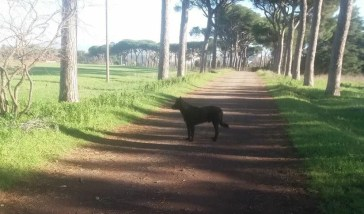 Nerone: una storia con finale a sorpresa per il cane (scomparso) dal Parco degli Acquedotti