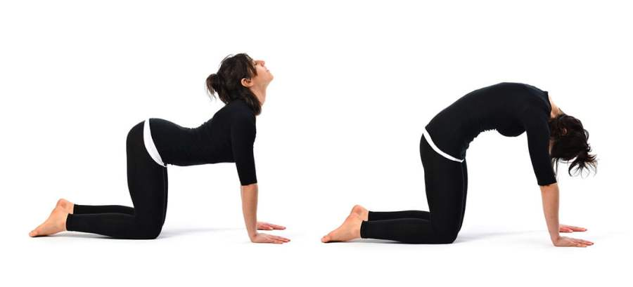 1-Yoga-Poses-Cat-Cow-Back