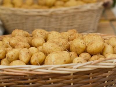 Pommes de terre Ile de Ré