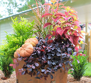 fall_is_for_planting