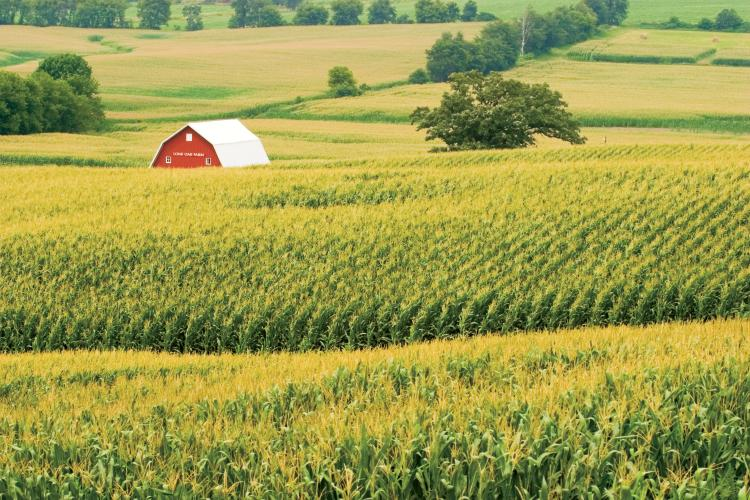 Image result for corn fields