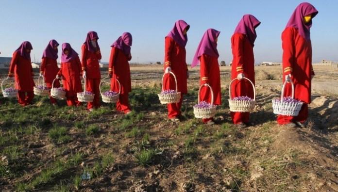 Afghanistan Saffron zafferano