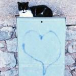 Amore-di-gatto