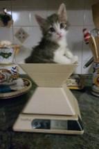 Pablo-el-gato-del-pueblo
