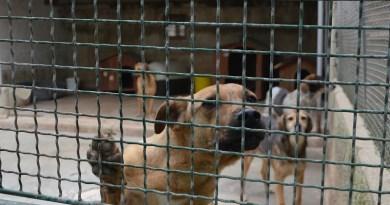 Rifugio del cane abbandonato