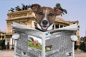 Cagnolino lettore del Gazzettino di Sicilia