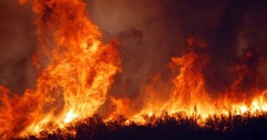 petizione per fermare gli incendi in Sicilia