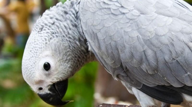 la testimonianza del pappagallo la fa condannare